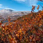 høgevarde-høst-høstfarger-fallcolours-høyfjell