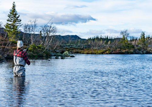 fiske-hogevarde